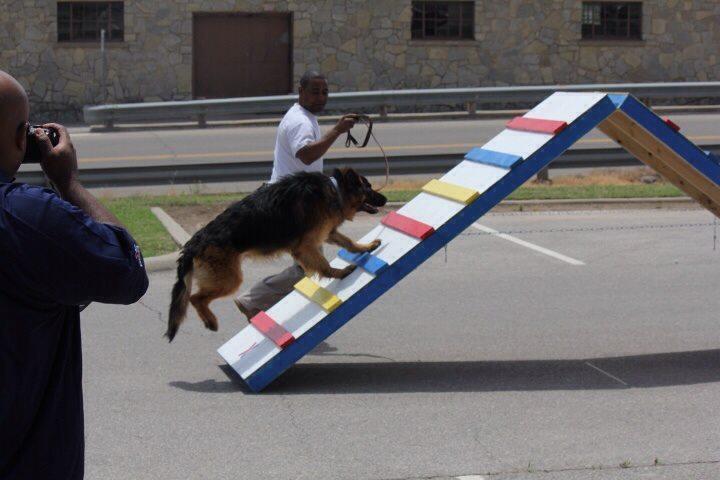 Pet Friendly Man's Best Friend Dog Training LLC