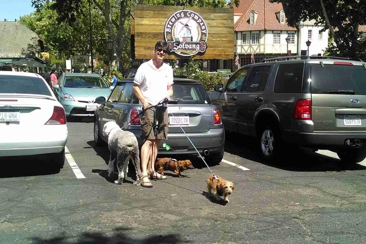 Pet Friendly Solvang Brewing Company