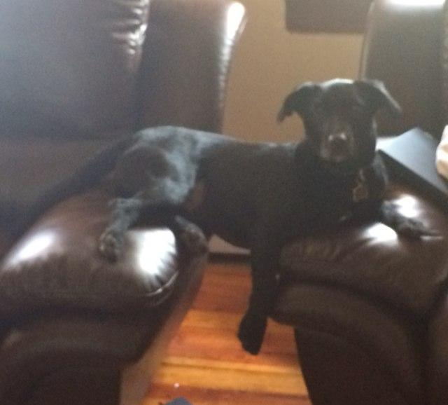 Shadow on his two couches
