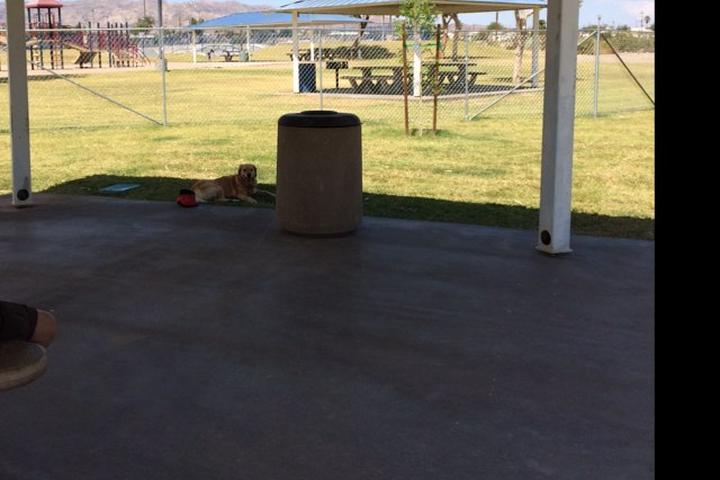 Pet Friendly Spike's Desert Dog Park