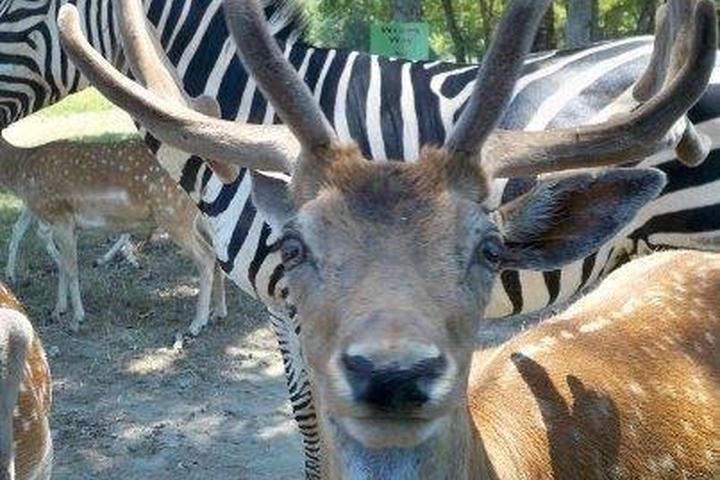 Pet Friendly Wild Country Safari