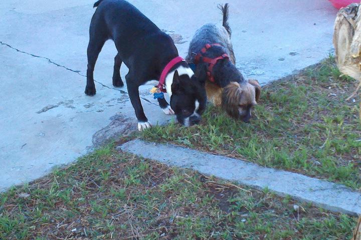 Pet Friendly Hillside Canine Resort & Spa