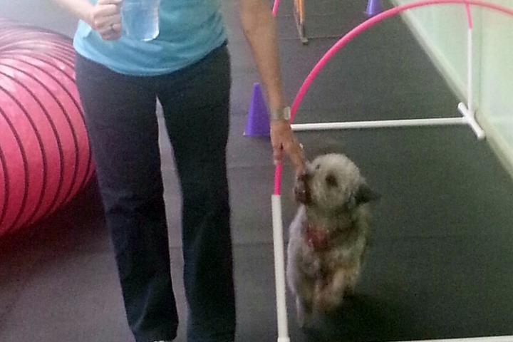 Pet Friendly Lucky Dog Sports Club