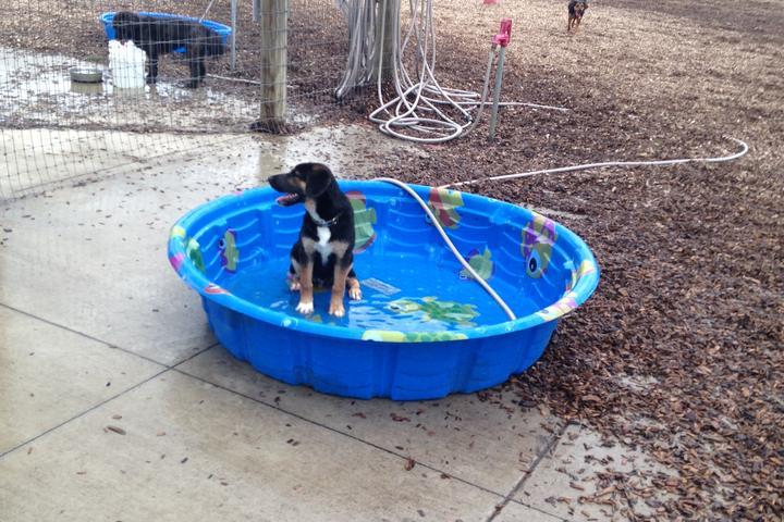 Pet Friendly Salem Rotary Dog Park