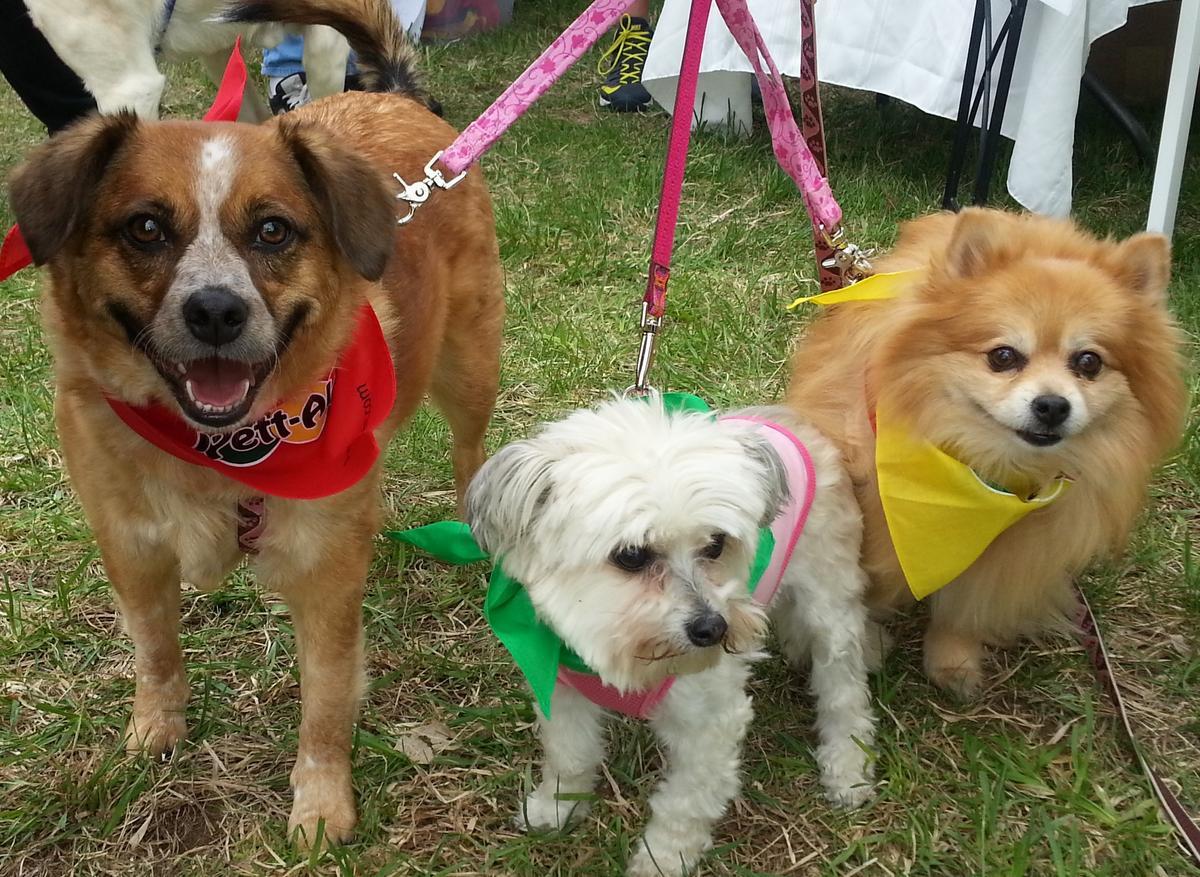 Dog Friendly Beaches Sudbury