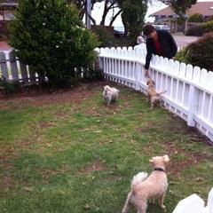 New dog area