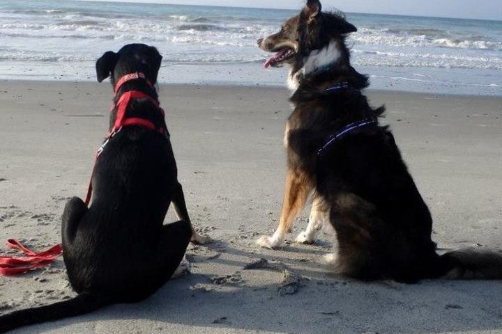 Pet Friendly Public Beaches at Folly Beach