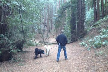 Pet Friendly Redwood Regional Park