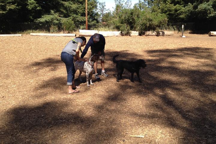 Pet Friendly Joaquin Miller Dog Park