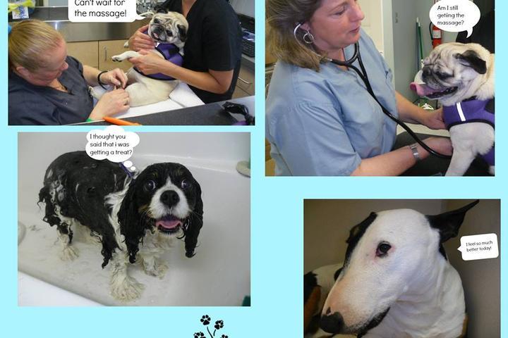 Pet Friendly Healing Paws Veterinary Wellness Center