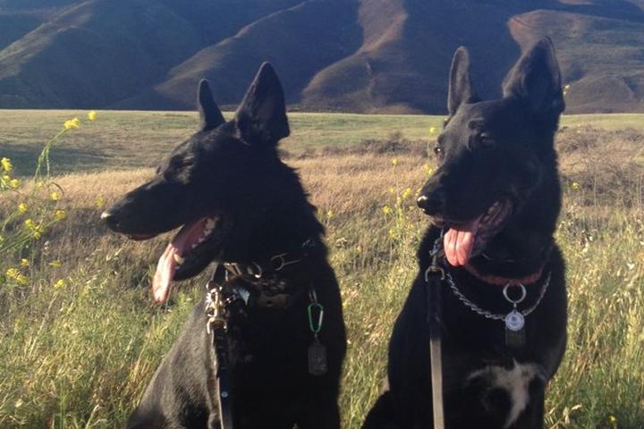 Pet Friendly Satwiwa Loop Trail at Rancho Sierra Vista/Satwiwa