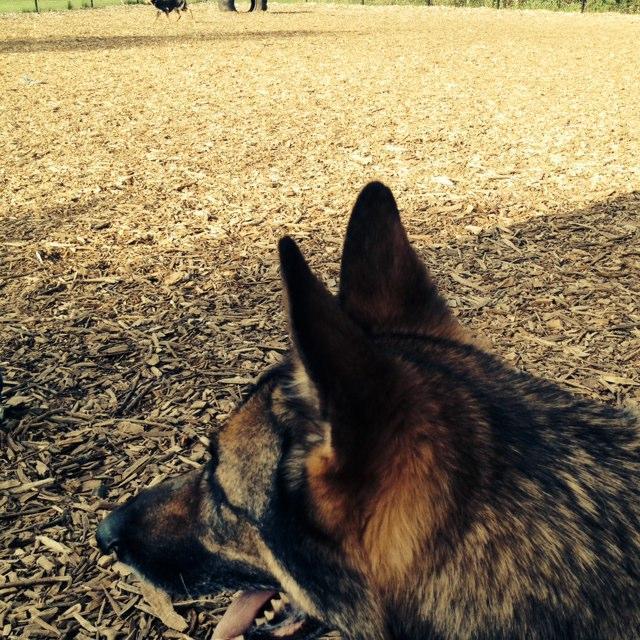 Melrose Ma Apartments: Melrose Dog Park