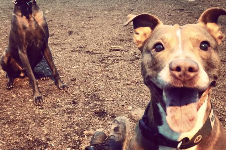 Pet Friendly James J. Braddock North Hudson County Park Dog Run