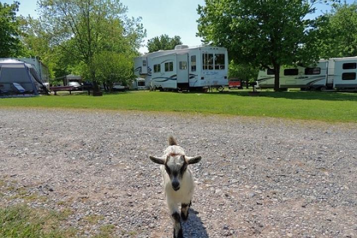 Pet Friendly Outdoor World Gettysburg Farm Campground