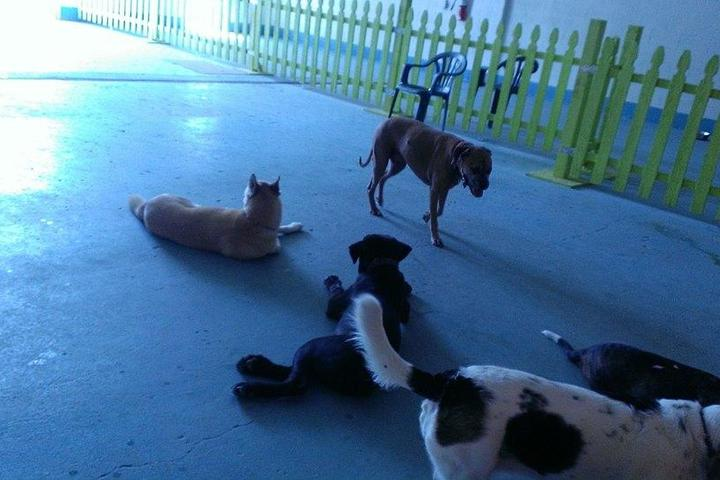Directory Of Doggie Daycare Boarding In Dublin Oh Bring