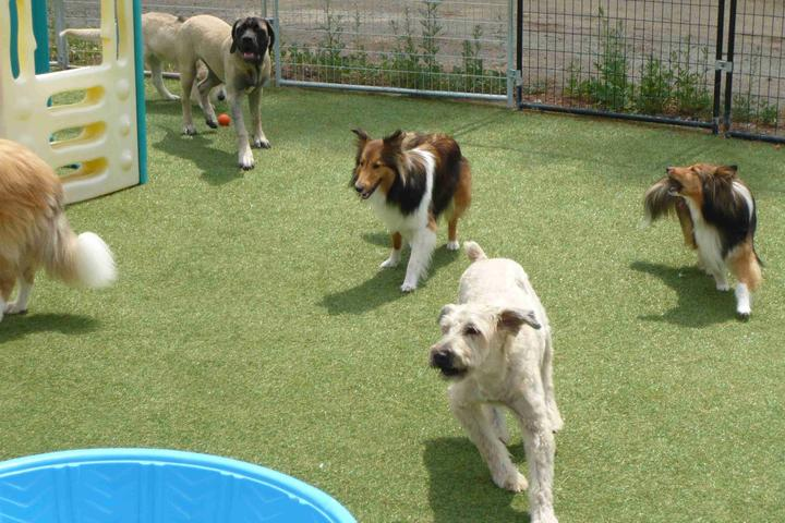 Pet Friendly Romp and Roll Dog Daycare