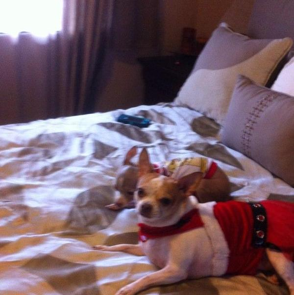 Dog friendly miami ok for Dog friendly hotels in miami