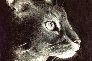 Pet Friendly Pet Portraits With Love