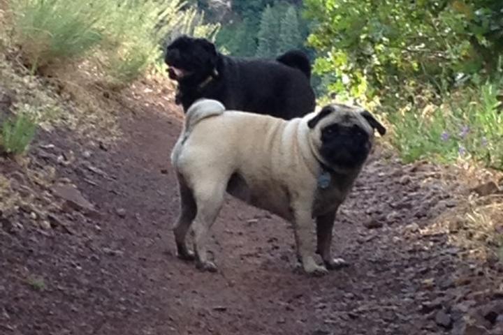 Pet Friendly Mill Creek Canyon