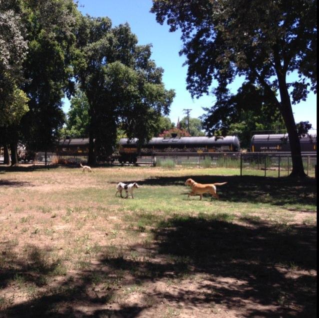 Dog Park West Sacramento