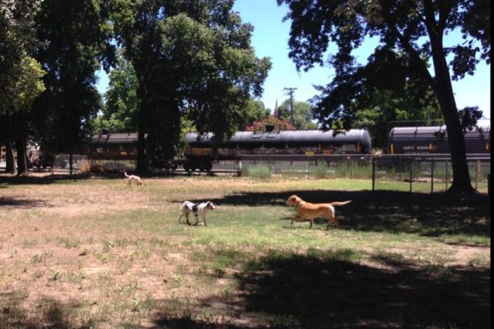 Pet Friendly Sam Combs Dog Park