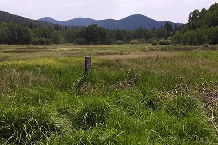 Pet Friendly Frazer Meadow Trail