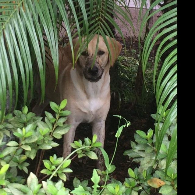 Dog Friendly Winter Garden, FL