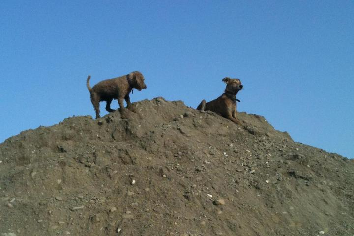 Dog Owner's Guide to Muscat, OM
