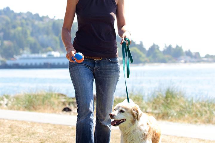 Pet Friendly Blue Dingo Pet Care