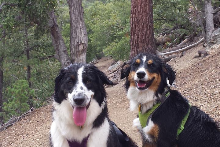 Pet Friendly Humber Park