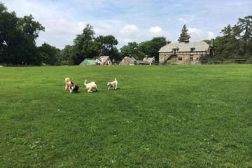 Pet Friendly Rowayton Dog Park