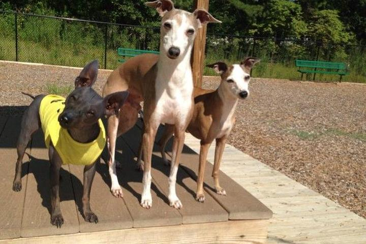 Pet Friendly Woofstock Dog Park