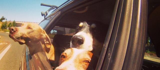 Dog Friendly Bend Or Bringfido