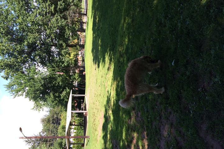 Pet Friendly Leonia Dog Park/Lakeview Park