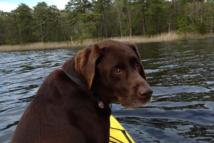 Pet Friendly Ayers Creek Adventures