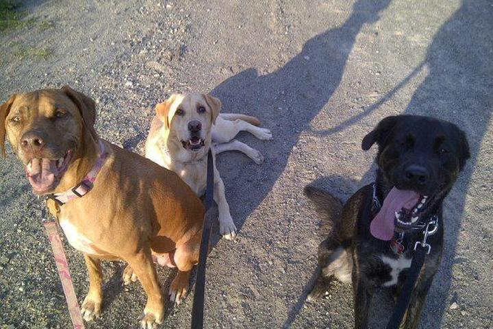 Pet Friendly Pooped Puppies K9 Adventures