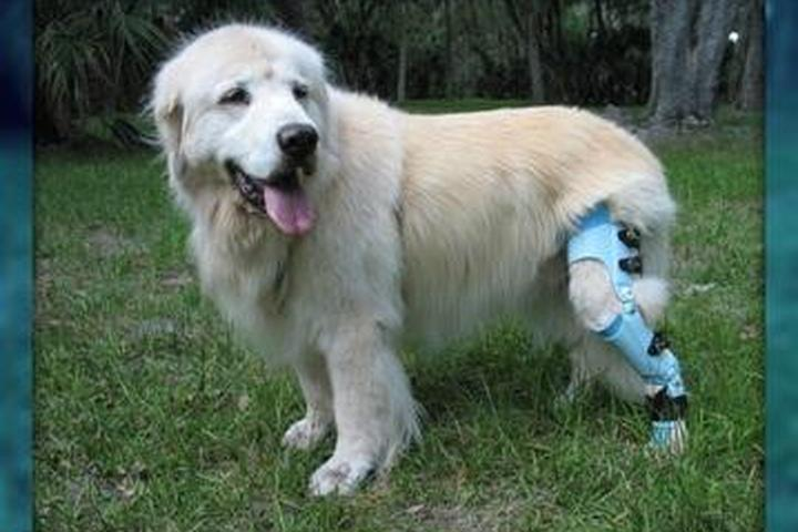 Pet Friendly Posh Dog Knee Brace