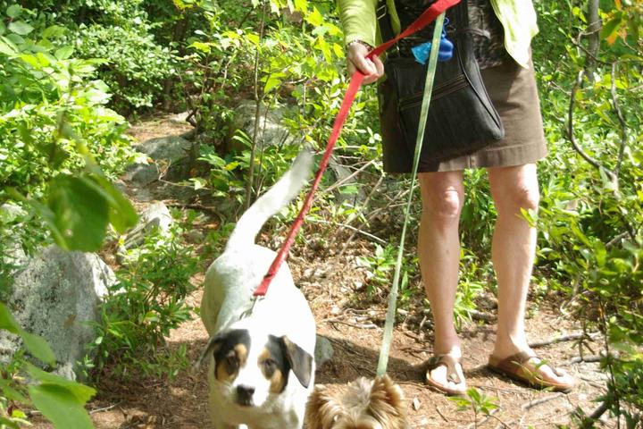 Dog Friendly Activities in New Hampshire - Bring Fido
