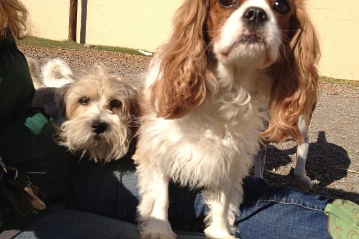 Pet Friendly Red Rover Pet Services LLC