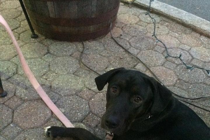 Dog Friendly Restaurants in Hillsborough, NJ - Bring Fido