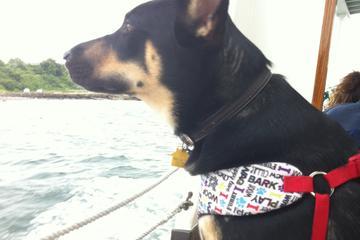 Pet Friendly Gansett Cruises