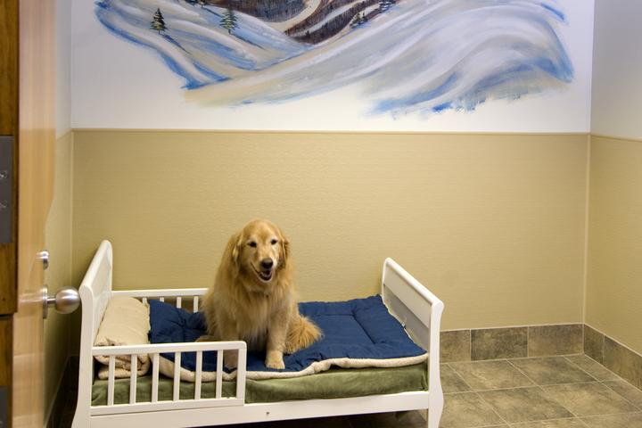 Pet Friendly Red Dog Pet Resort