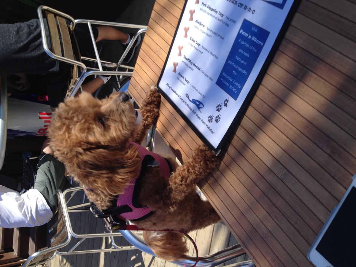 Opal checking out Macky's menu