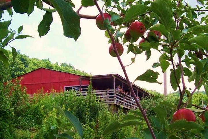 Pet Friendly The Historic Orchard at Altapass