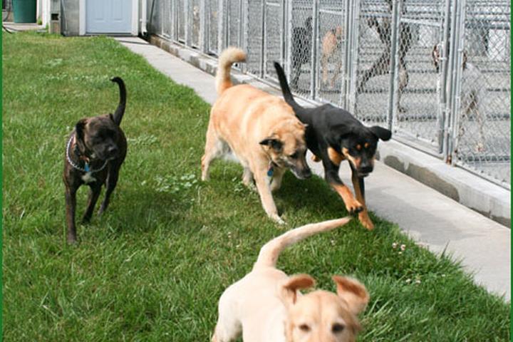 Pet Friendly Aberdeen Acres Pet Resort & Spa