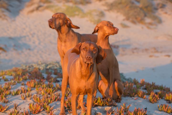 Pet Friendly Modern Pet Portraiture — Creative Pet Photography by Diana Lundin