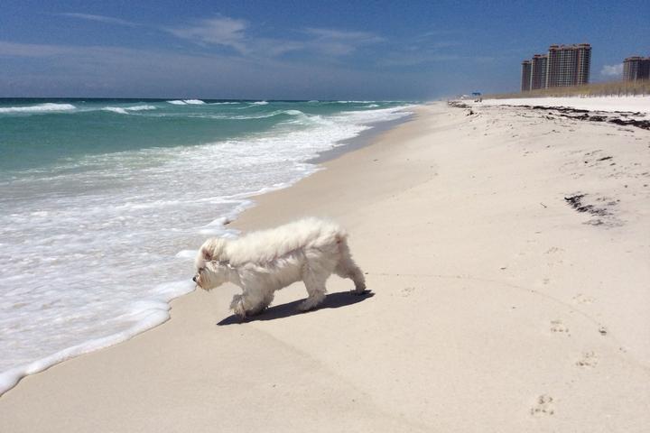 Pet Friendly Pensacola Beach West Dog Park