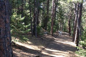 Pet Friendly Elk Meadow Open Space Bark Park