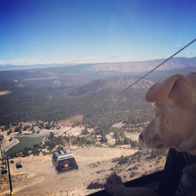 Mammoth mountain gondola for Mammoth mountain cabins pet friendly