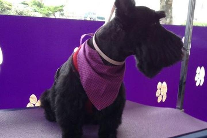 Pet Friendly Dog Gone Cute Pet Grooming